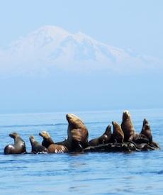 AGSSI margriet ruurs SEALS