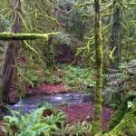 creek-moss-edit