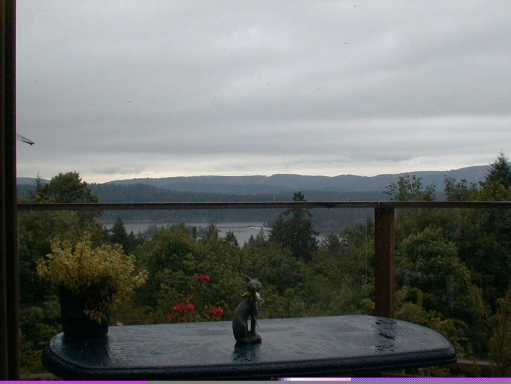 Rainy Day at The Salt Spring Way