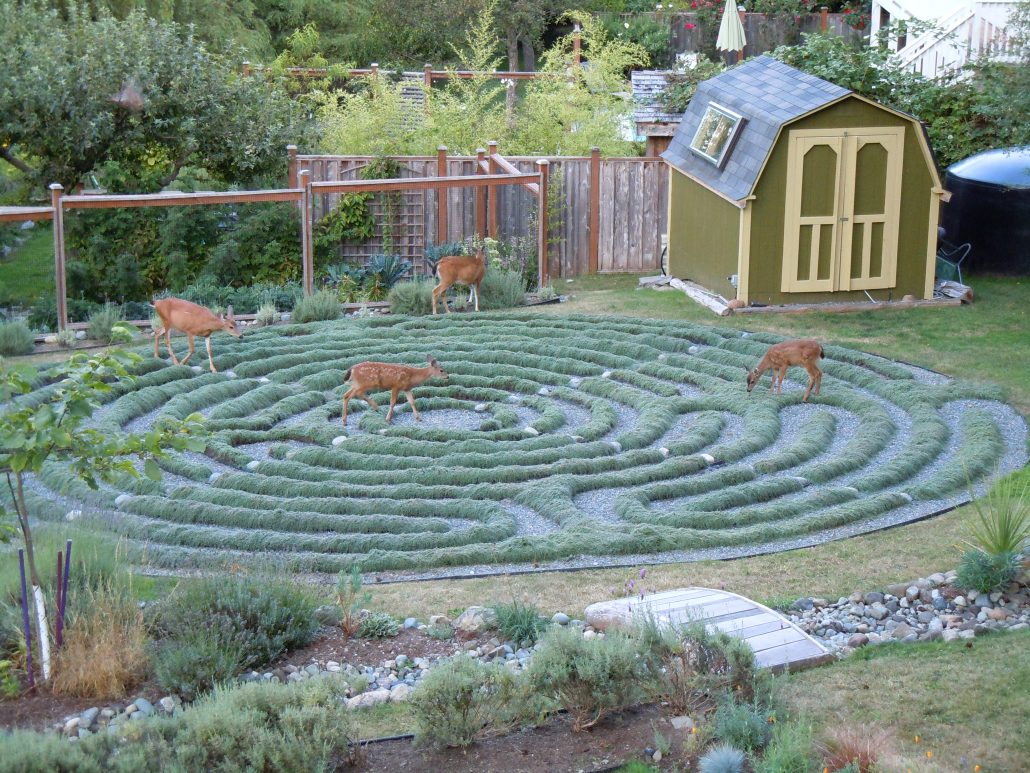 Deer walking the Labyrinth!