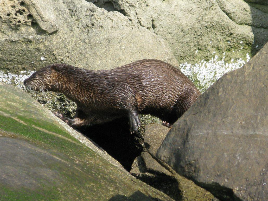 Nice otter